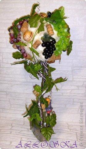 Наконец моя мечта осуществилась, я тоже вырастила виноградное деревце высотой 65 см,спасибо всем мастерам СМ за вдохновение!!!! Правда долго собирала все необходимое... фото 5