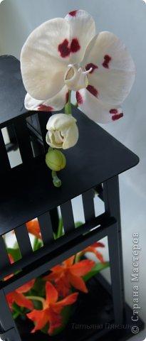 Но ярко-красный огненный цветок  Ты сорвать однажды захотела.  И опять, как белый мотылёк,  На его сиянье полетела.  Только сложится нелегко  Дружба пламени с мотыльком...  Композиция с орхидеями. Цветы выполнены из специальной полимерной глины для лепки цветов (modern clay, modena clay, Flower Clay ), по составу близкой к холодному фарфору. Уникальные свойства глины позволяют проработать самые тонкие детали. Лепестки и листья готового цветка, после полного высыхания, остаются немного гибкими. фото 5