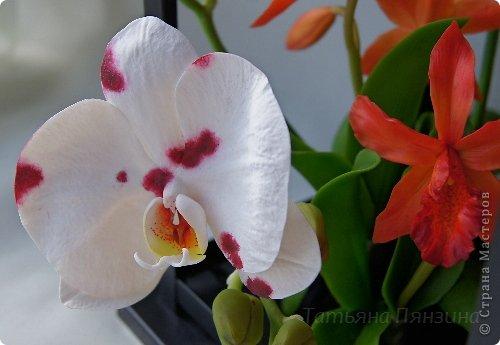 Но ярко-красный огненный цветок  Ты сорвать однажды захотела.  И опять, как белый мотылёк,  На его сиянье полетела.  Только сложится нелегко  Дружба пламени с мотыльком...  Композиция с орхидеями. Цветы выполнены из специальной полимерной глины для лепки цветов (modern clay, modena clay, Flower Clay ), по составу близкой к холодному фарфору. Уникальные свойства глины позволяют проработать самые тонкие детали. Лепестки и листья готового цветка, после полного высыхания, остаются немного гибкими. фото 11