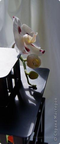 Но ярко-красный огненный цветок  Ты сорвать однажды захотела.  И опять, как белый мотылёк,  На его сиянье полетела.  Только сложится нелегко  Дружба пламени с мотыльком...  Композиция с орхидеями. Цветы выполнены из специальной полимерной глины для лепки цветов (modern clay, modena clay, Flower Clay ), по составу близкой к холодному фарфору. Уникальные свойства глины позволяют проработать самые тонкие детали. Лепестки и листья готового цветка, после полного высыхания, остаются немного гибкими. фото 6
