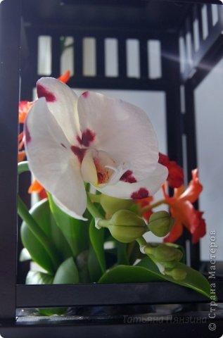 Но ярко-красный огненный цветок  Ты сорвать однажды захотела.  И опять, как белый мотылёк,  На его сиянье полетела.  Только сложится нелегко  Дружба пламени с мотыльком...  Композиция с орхидеями. Цветы выполнены из специальной полимерной глины для лепки цветов (modern clay, modena clay, Flower Clay ), по составу близкой к холодному фарфору. Уникальные свойства глины позволяют проработать самые тонкие детали. Лепестки и листья готового цветка, после полного высыхания, остаются немного гибкими. фото 10