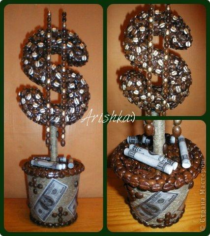 Кофейные деревья фото 10