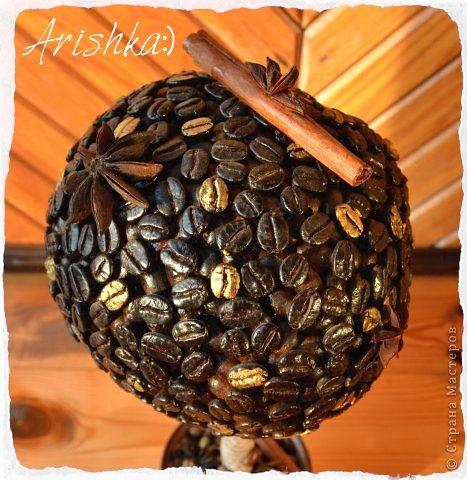 Кофейные деревья фото 3