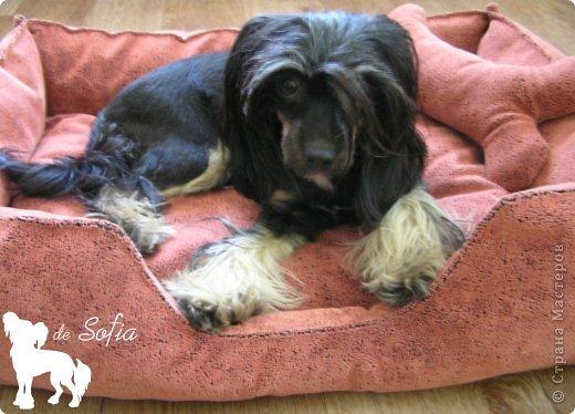 Представляю Вам мастер - класс по шитью лежака для собаки. Это очень просто и интересно.  фото 45