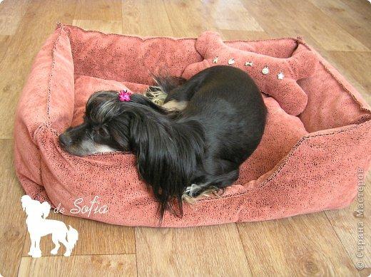 Представляю Вам мастер - класс по шитью лежака для собаки. Это очень просто и интересно. фото 47
