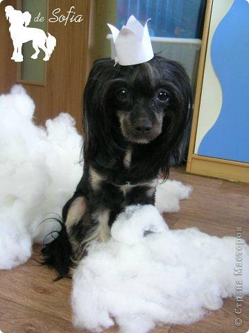 Представляю Вам мастер - класс по шитью лежака для собаки. Это очень просто и интересно. фото 9