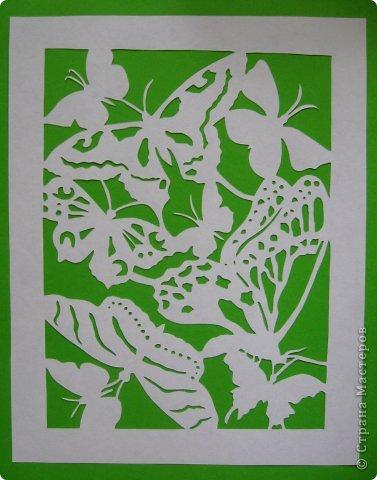 Бабочки_Bernard Levine фото 5
