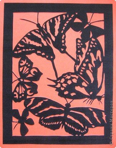 Бабочки_Bernard Levine фото 13