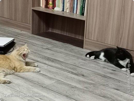 В доме у нас всегда были кошки, без этих усатиков чего-то не хватает. К сожалению, в частном доме много опасностей, уберечь от которых практически невозможно. В частном доме я живу уже 8 лет.  фото 11