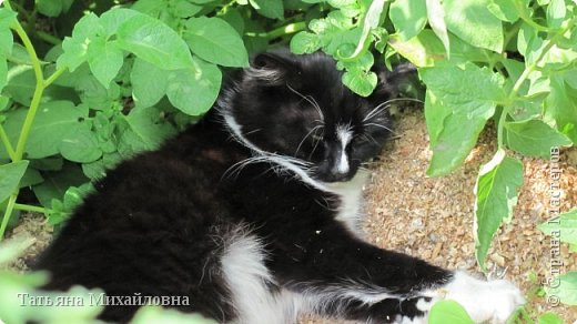 В доме у нас всегда были кошки, без этих усатиков чего-то не хватает. К сожалению, в частном доме много опасностей, уберечь от которых практически невозможно. В частном доме я живу уже 8 лет.  фото 4