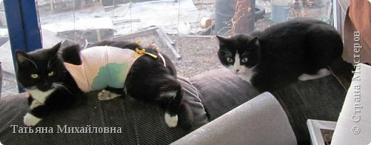 В доме у нас всегда были кошки, без этих усатиков чего-то не хватает. К сожалению, в частном доме много опасностей, уберечь от которых практически невозможно. В частном доме я живу уже 8 лет.  фото 5