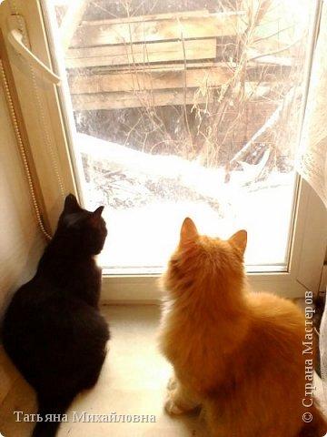 В доме у нас всегда были кошки, без этих усатиков чего-то не хватает. К сожалению, в частном доме много опасностей, уберечь от которых практически невозможно. В частном доме я живу уже 8 лет.  фото 6