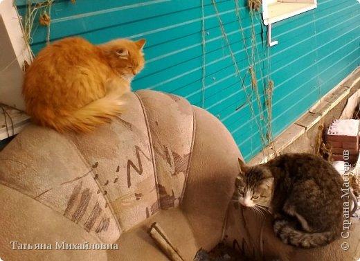 В доме у нас всегда были кошки, без этих усатиков чего-то не хватает. К сожалению, в частном доме много опасностей, уберечь от которых практически невозможно. В частном доме я живу уже 8 лет.  фото 8