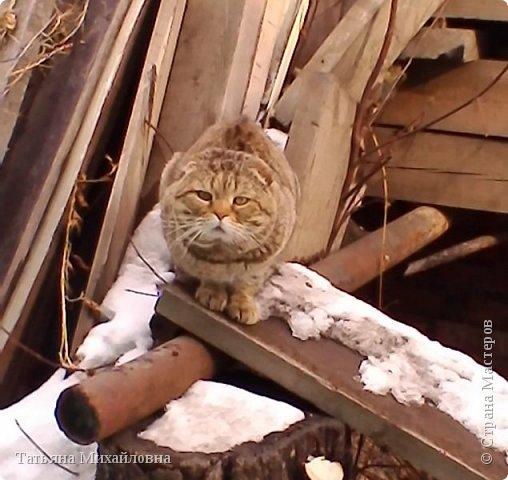 В доме у нас всегда были кошки, без этих усатиков чего-то не хватает. К сожалению, в частном доме много опасностей, уберечь от которых практически невозможно. В частном доме я живу уже 8 лет.  фото 10