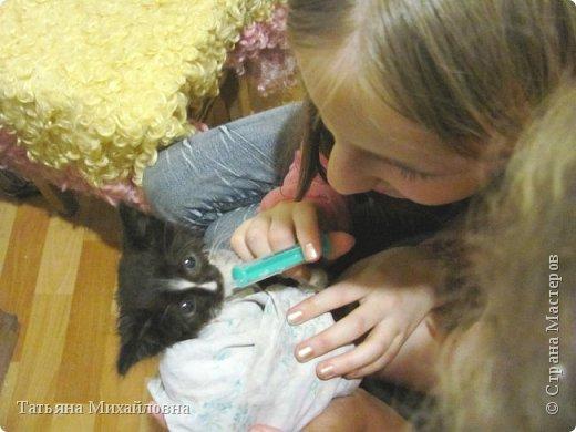 В доме у нас всегда были кошки, без этих усатиков чего-то не хватает. К сожалению, в частном доме много опасностей, уберечь от которых практически невозможно. В частном доме я живу уже 8 лет.
