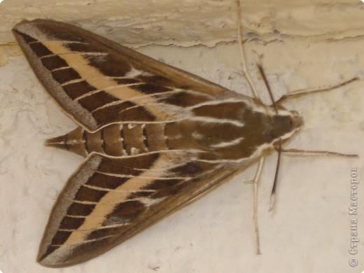 Как красиво смотрится бабочка на ярком пёстром платке фото 4