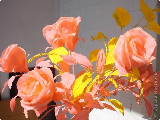 Розы в лучах солнца. фото 1