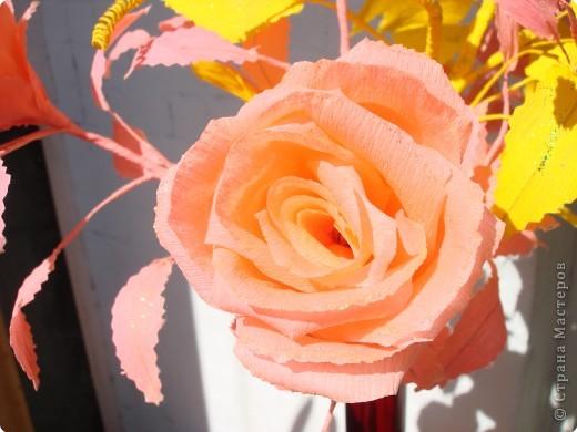 Розы в лучах солнца. фото 2