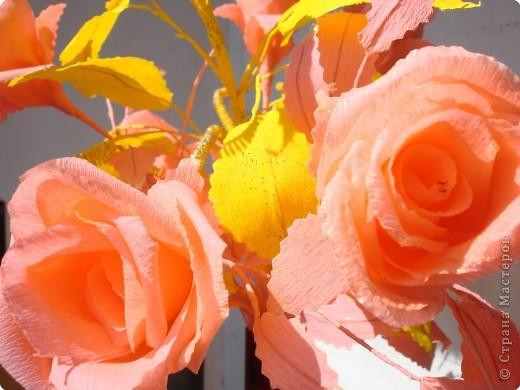 Розы в лучах солнца. фото 3