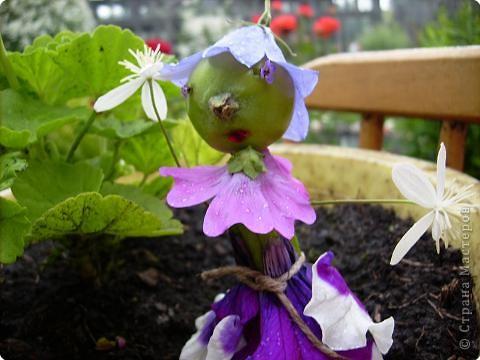 Цветочная Фея просыпается очень рано, с  первыми лучами солнышка, когда ещё все дети спят крепким сном. У неё очень много работы в саду. Нужно поговорить со всеми цветочками. фото 1