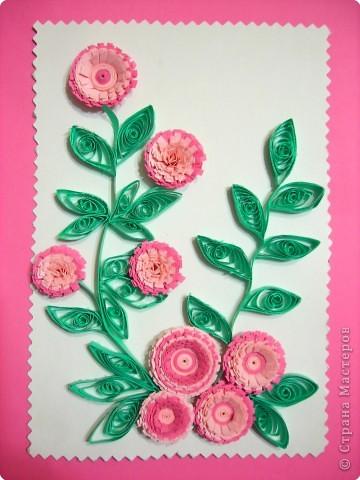 Цветы. фото 1