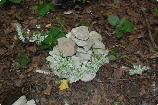 И на камнях цветы растут... фото 3