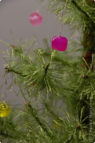 Зеленая красавица фото 2