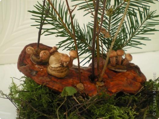 Композиция «Сказочная грибница» фото 2