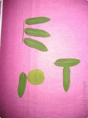 буквы из листьев