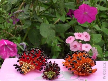 Жили-были бабушка Роза и дедушка Василек... Любили они разводить цветы в своем саду. фото 2
