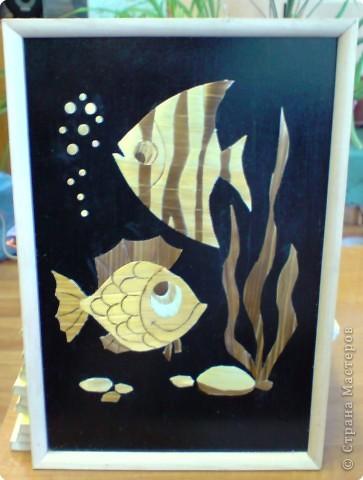 золотые рыбки фото 1