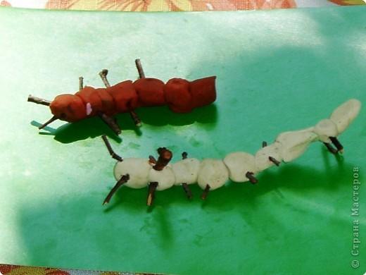 Гусенички фото 5