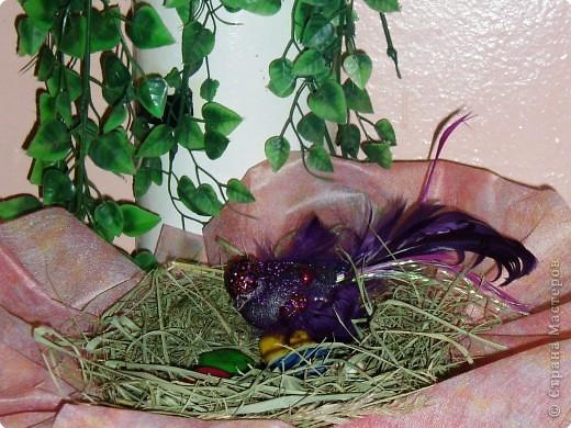 Яички диковинной птички. фото 2