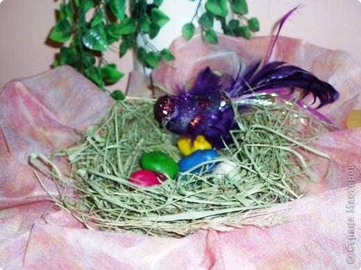 Яички диковинной птички. фото 1
