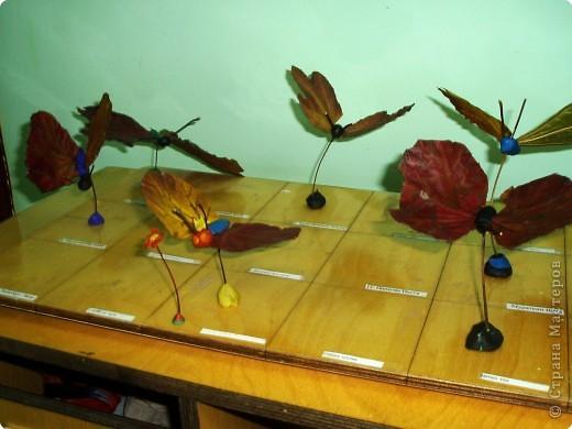 Воспоминание о лете: бабочки летают - бабочки!  фото 1