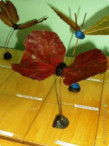 Воспоминание о лете: бабочки летают - бабочки!  фото 2