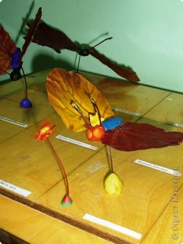 Воспоминание о лете: бабочки летают - бабочки!  фото 3