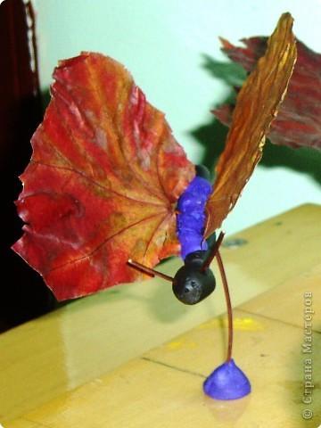 Воспоминание о лете: бабочки летают - бабочки!  фото 5