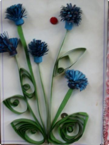Просто как живые мои васи - васильки ярко- голубые фото 1