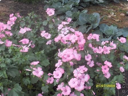 Цветочная полянка на память о лете фото 3