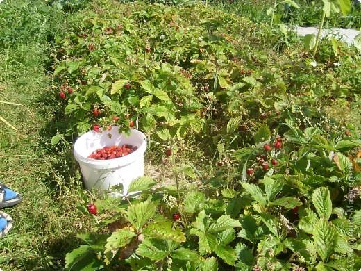 Моя любимая ягода! Выполнена в технике вышивка крестиком и оформлена в  виде открытки. фото 2