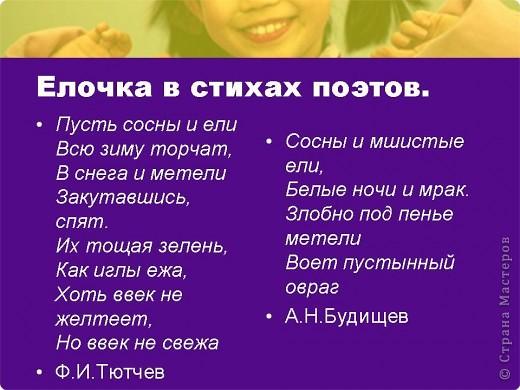 """Презентация проекта-акции """"Берегите ель!"""" фото 4"""