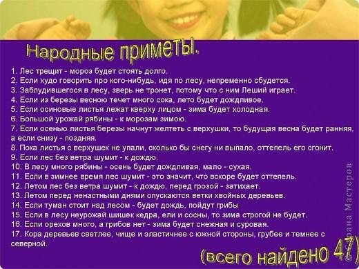 """Презентация проекта-акции """"Берегите ель!"""" фото 6"""