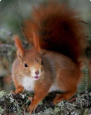 Увидел Никита в лесу интересного зверька. Кто это? Такой шустрый, быстрый, даже рассмотреть невозможно. Только и видно -  рыжее пятнышко мелькает. ЭТО БЕЛОЧКА! фото 1
