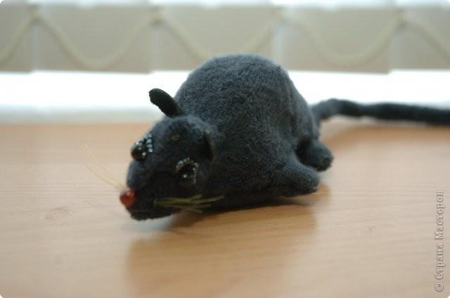 Крыса Шушара
