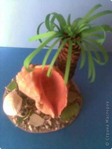 Летний день       В один из жарких летних дней черепаха, а это конечно она, а никой не камень, решила отдохнуть под широкими листьями пальмы.