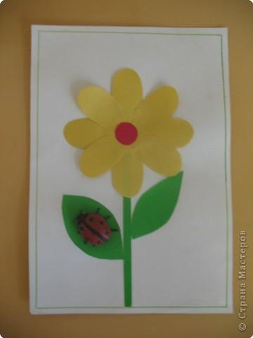 Цветы Белогорья 2 фото 3