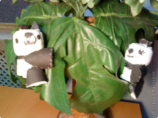 Бамбуковые мишки фото 2