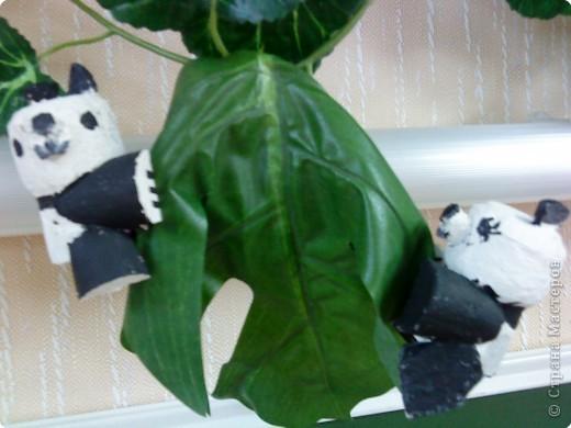 Бамбуковые мишки фото 1