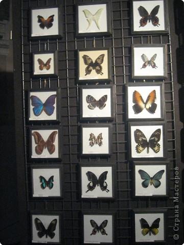 Коллекция насекомых фото 5